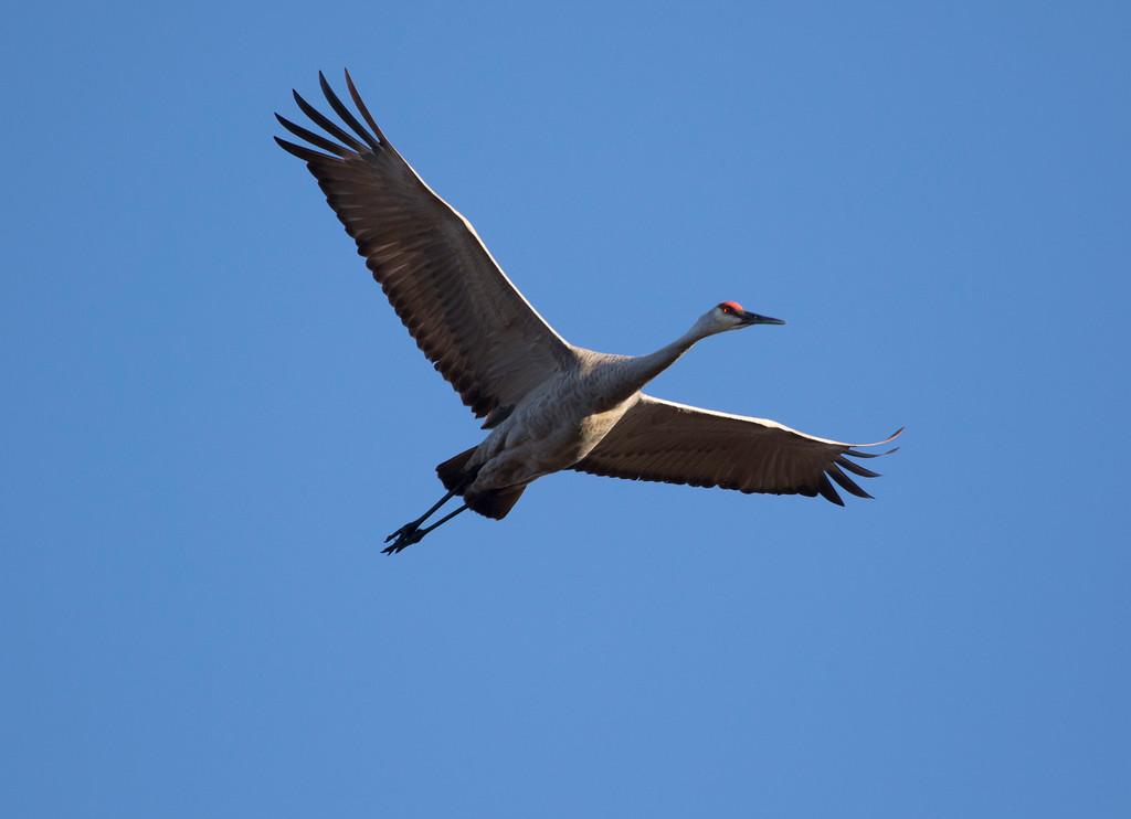 Crex cranes 39 (2015)