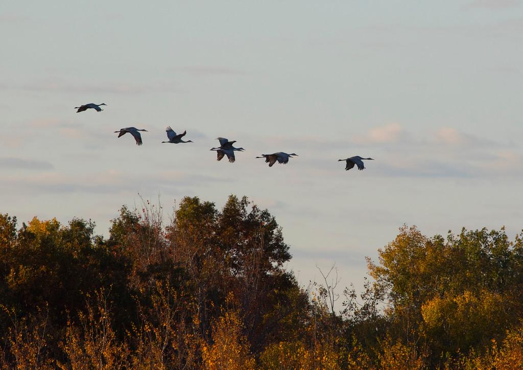 Crex cranes 18 (2015)