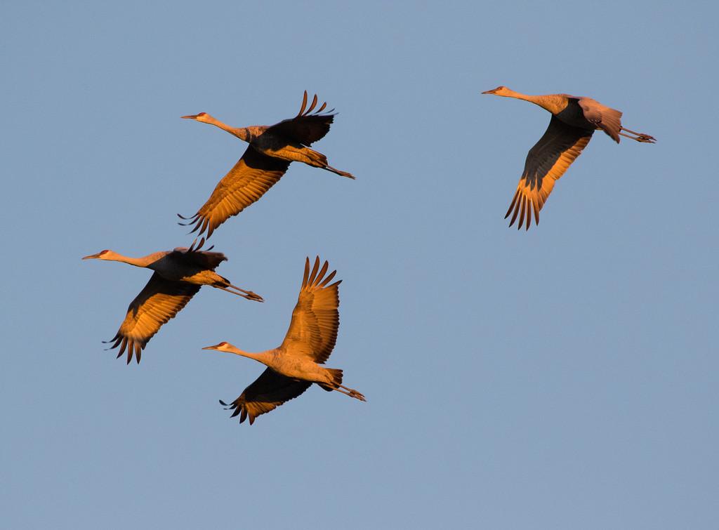 Crex cranes 19 (2015)