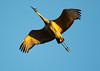Crex cranes 32 (2015)