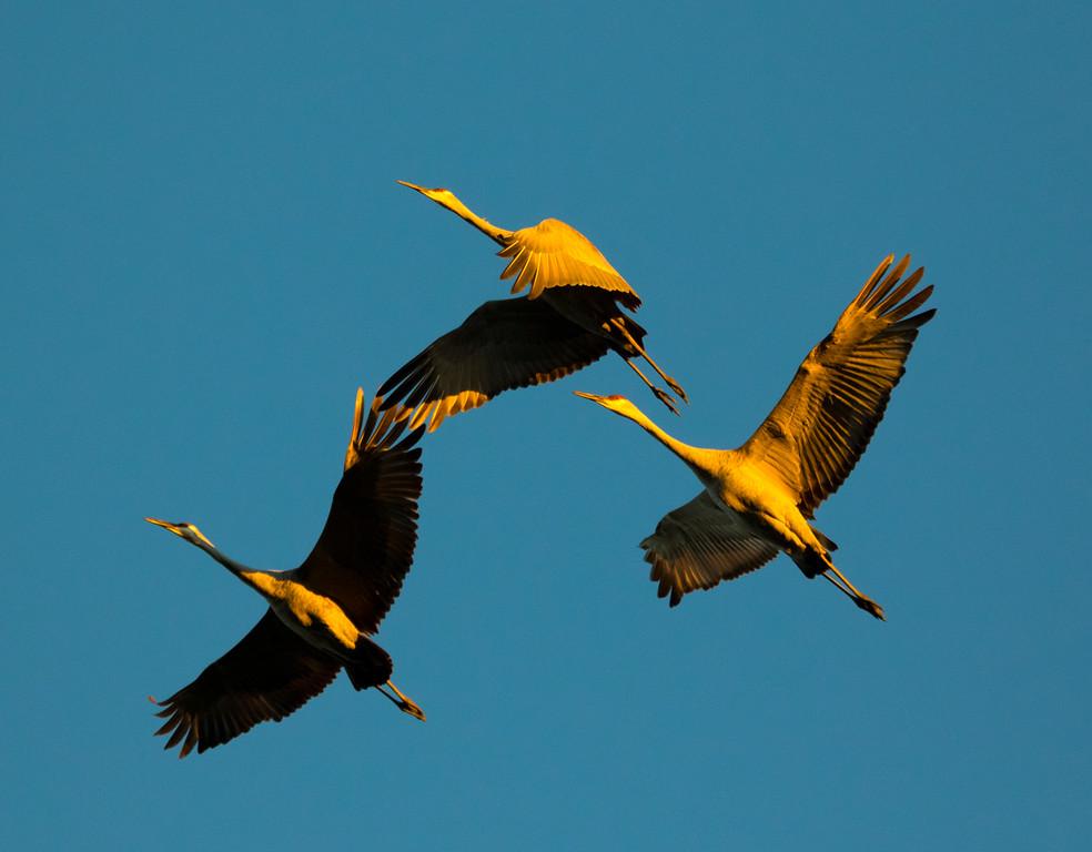 Crex cranes 29 (2015)
