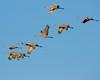 Crex cranes 21 (2015)