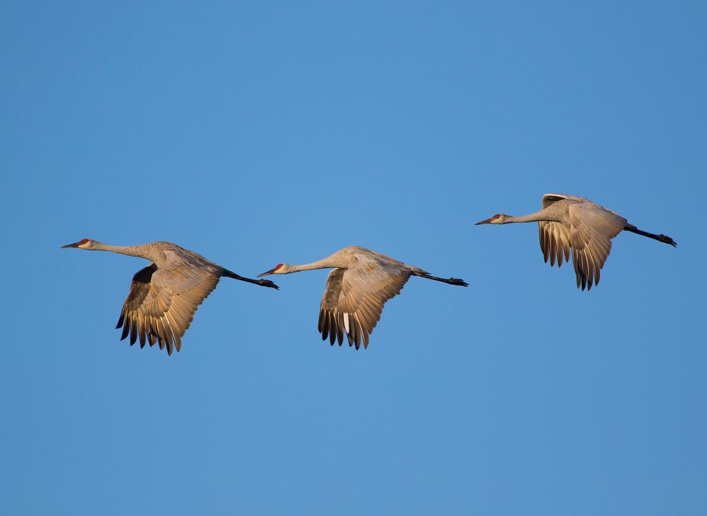 Crex cranes 22 (2015)