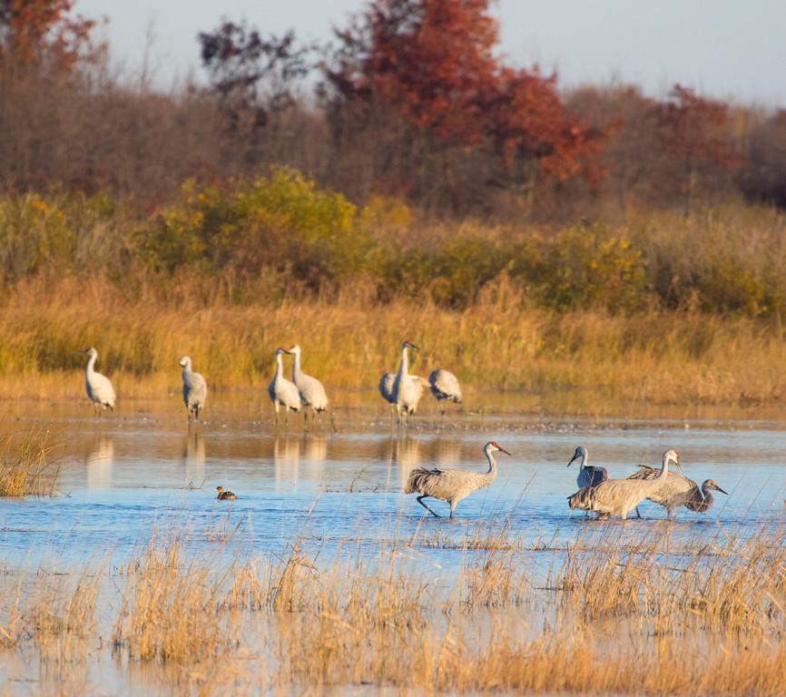 Crex cranes 15 (2015)
