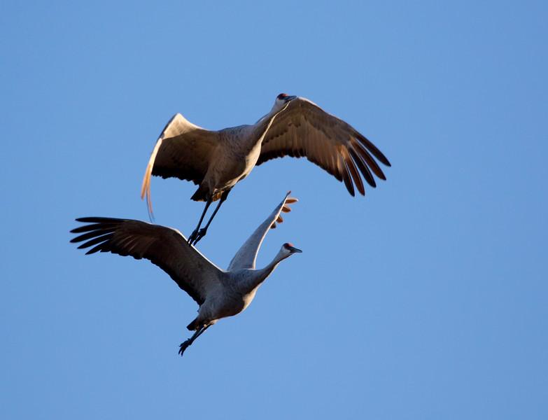 Crex cranes 24 (2015)