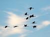 Crex cranes 35 (2015)