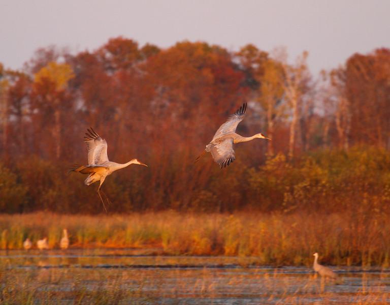 Chex cranes 7 (10-22-2011)