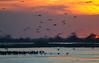Nebraska cranes 24 (2012)