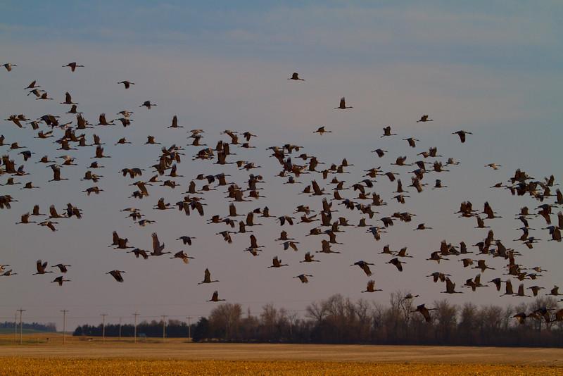 Nebraska cranes 33 (2012)