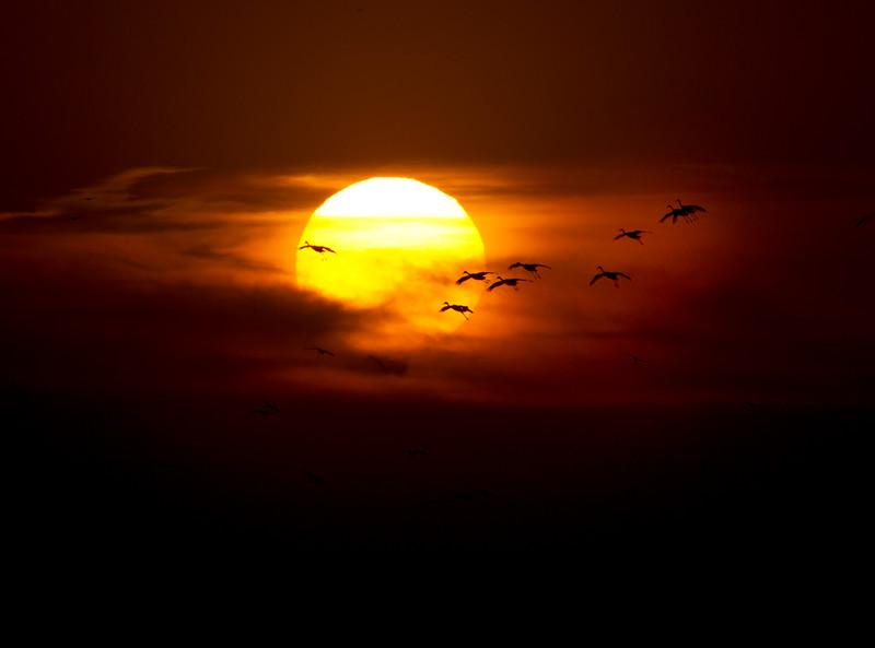 Nebraska cranes 29 (2012)