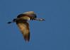 Nebraska cranes 2 (2012)