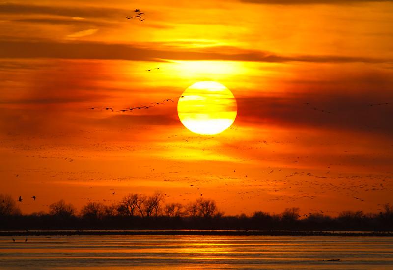 Nebraska cranes 12 (2012)