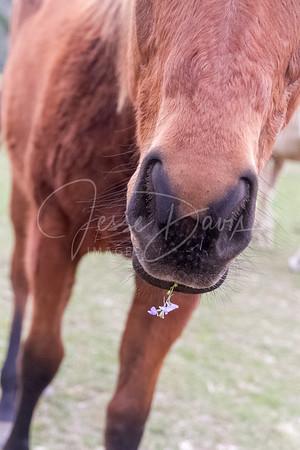 Horses & Mules