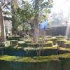 066_17 ans, Granada  Alhambra Gardens  Evoke Paradise  Luce