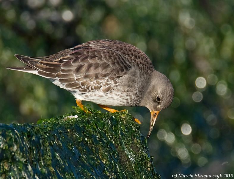 Feeding on the rock