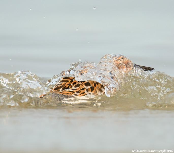Bathing in the sea