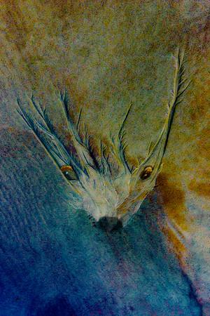 Sand Elk