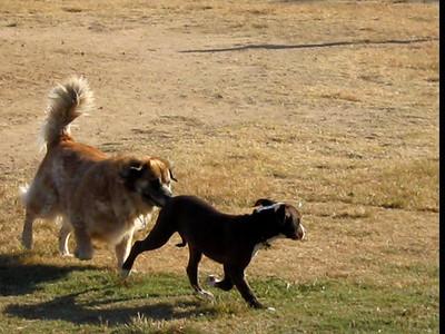 2008/10/11 >> Dog Park - Woodward Park