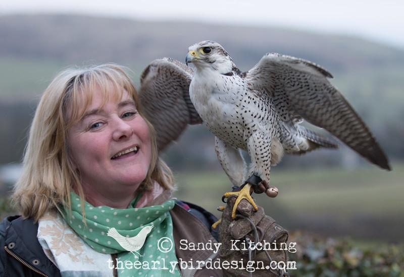 Sandy Kitching & falcon Jack Feb 2015
