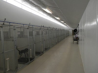 Sani Kennels with Chain Link