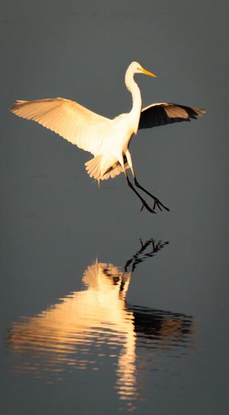 Egret Landing, 2012