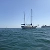 Terns and Cruis Ship