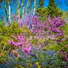 wildflowers-5780