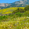 gaviota wildflowers-5656