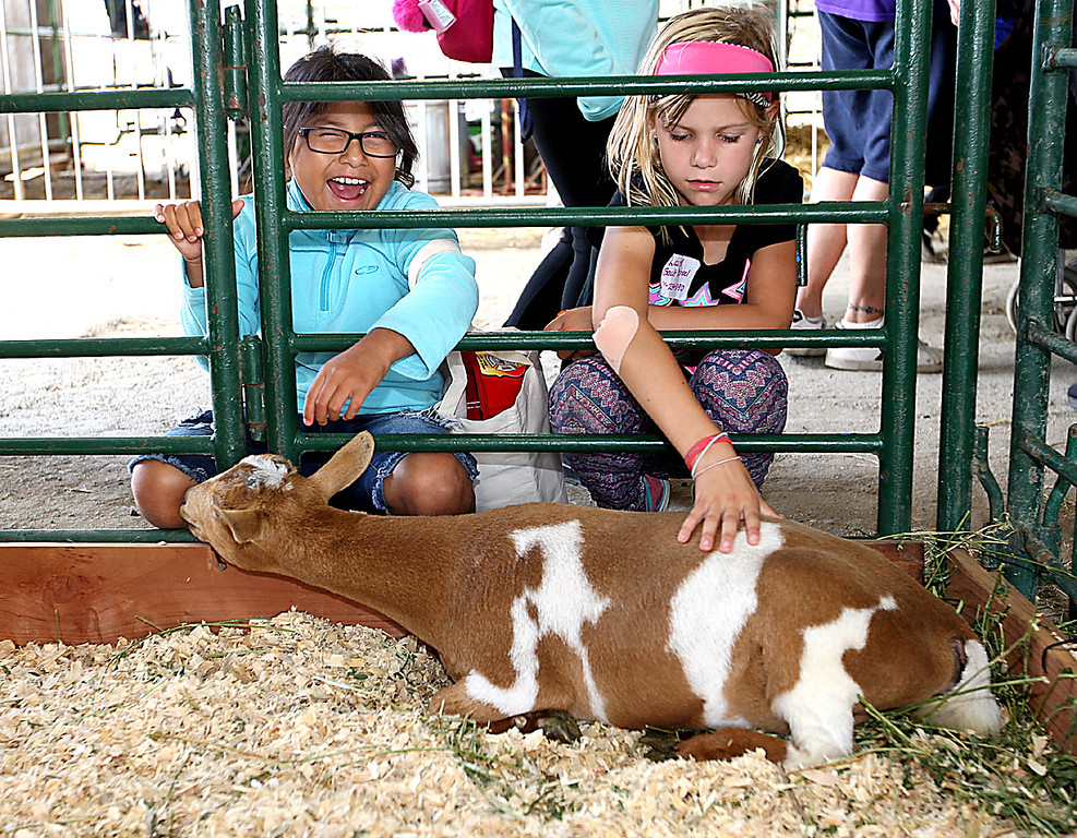 . Veronica Vasquez and Laurel Guy visit with a young, friendly goat at the Santa Cruz County Fair on Thursday. (Dan  Coyro -- Santa Cruz Sentinel)