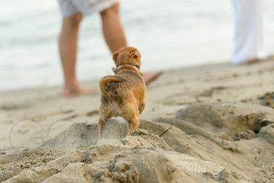 6368_d800b_Tierra_B_Capitola_Beach_Family_Photography