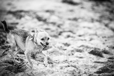 6380_d800b_Tierra_B_Capitola_Beach_Family_Photography
