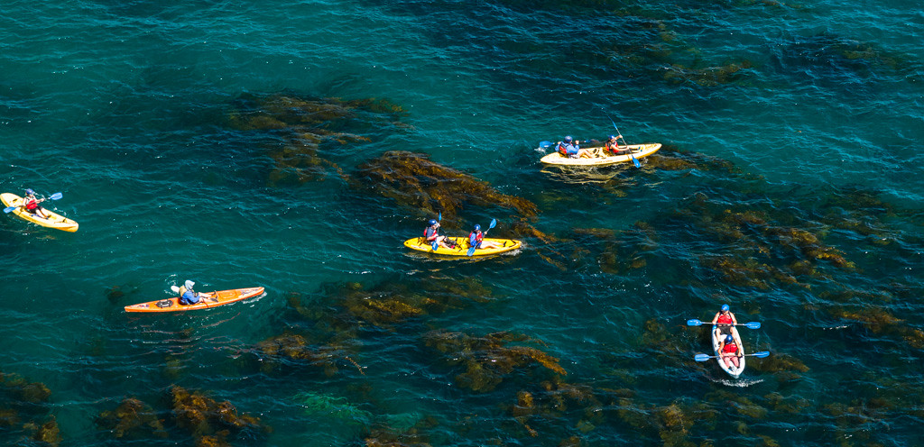 Kayaking in the kelp beds