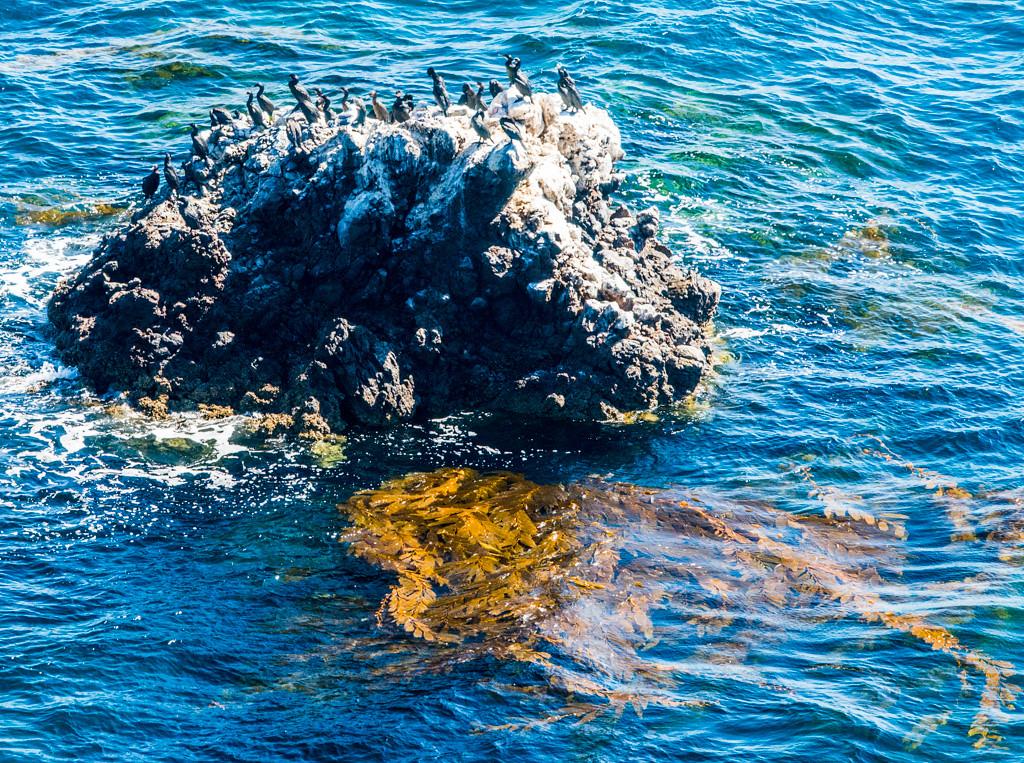 Cormorants on the rock