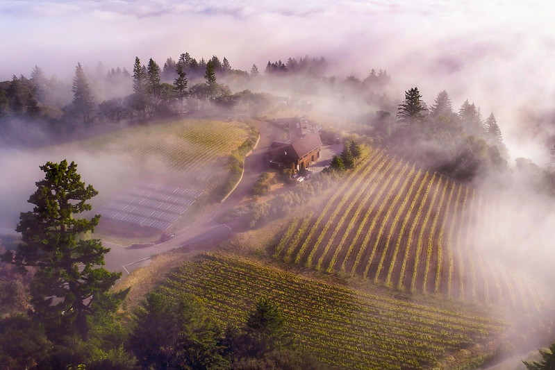 Fogarty Winery & Vineyards