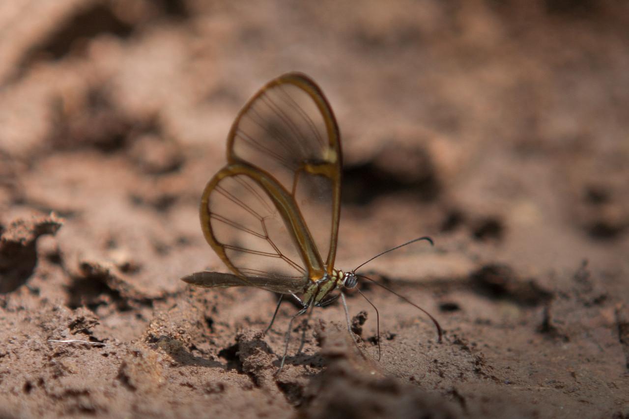 Butterflies at the Botanical Garden in Samaipata, Bolivia