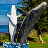 20181026_Monterey Bay_5960