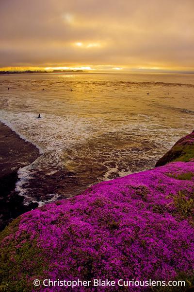 Flowers and sunriset-Edit
