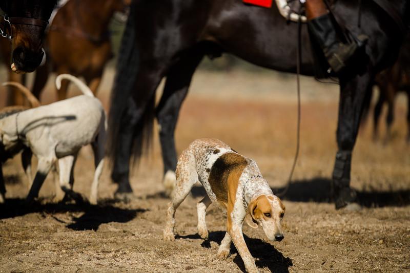 Santa Fe Hunt Club - Opening Day - 11-9-19-25.jpg