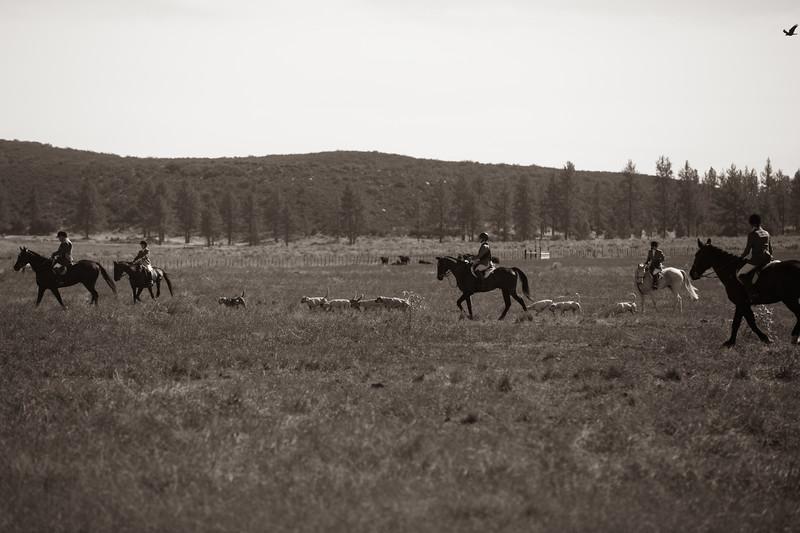 Santa Fe Hunt Club - Opening Day - 11-9-19-314.jpg