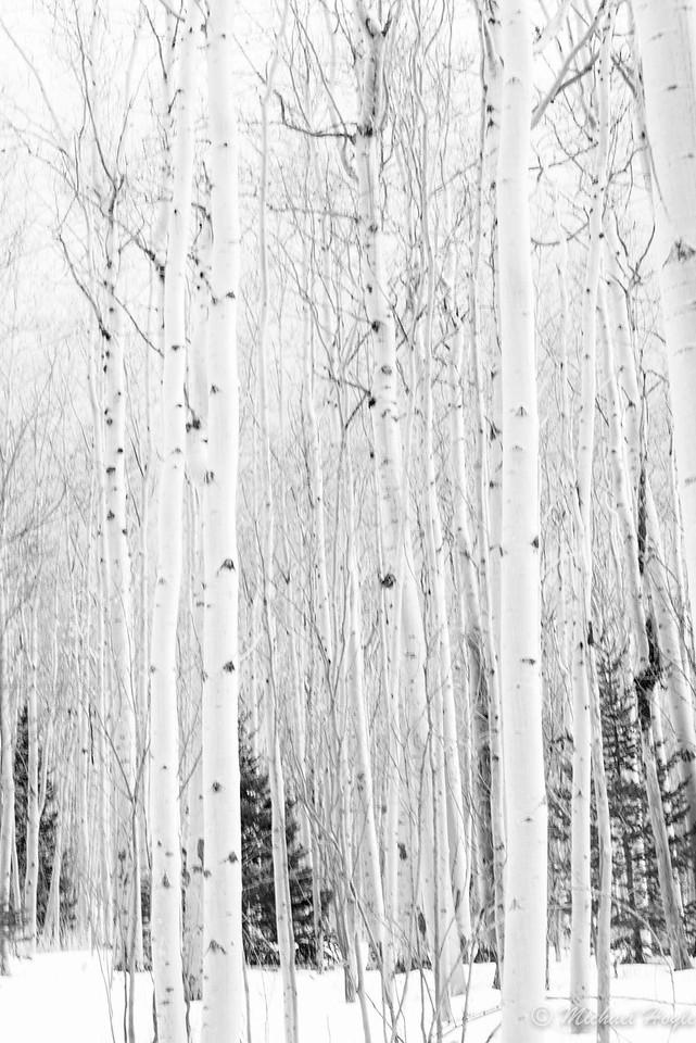 Big Tesuque, Santa Fe National Forest