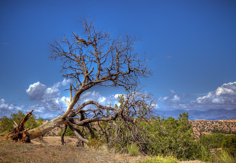 Tree Landscape near Tesuque, New Mexico