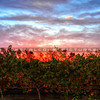 cottonwood-winery_6129