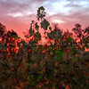 cottonwood-winery_6153