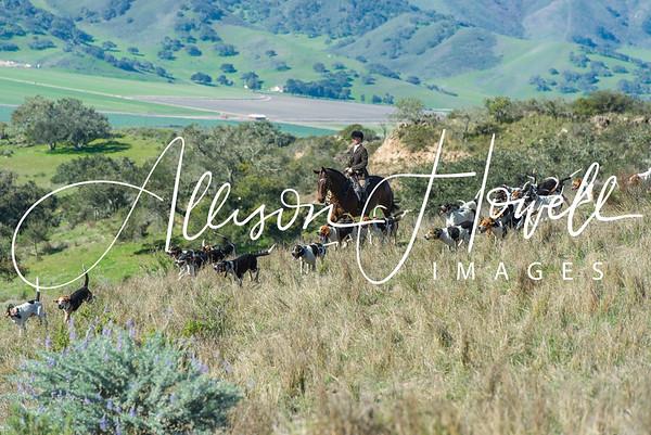 Santa Ynez Valley Hounds