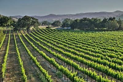 Santa Ynez Valley 8