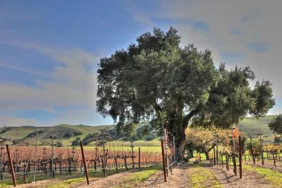 Santa Ynez Valley 20