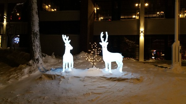 Reindeer albeit decorative ones