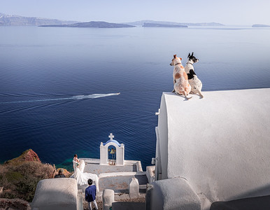 K9 wedding guests!! - Oia, Santorini