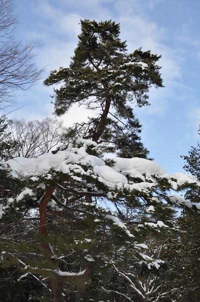 Sapporo Winter, Jan 2016