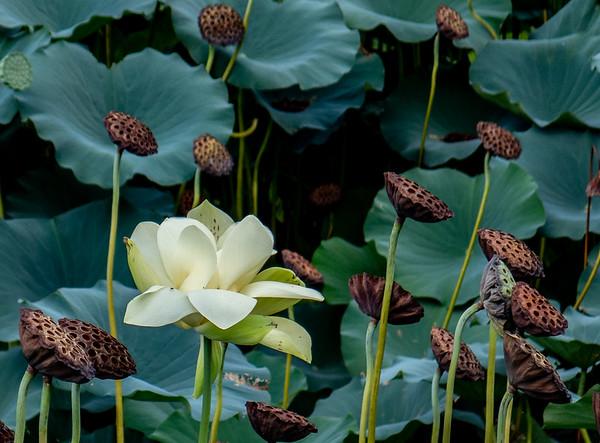 Sarah Duke Gardens